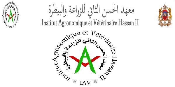 Recrutement (12) Professeurs Assistants dans plusieurs domaines à L'IAV
