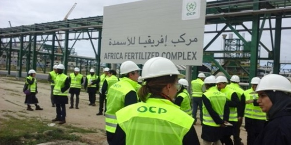 Recrutement chez l'Office Chérifien des Phosphates (OCP)