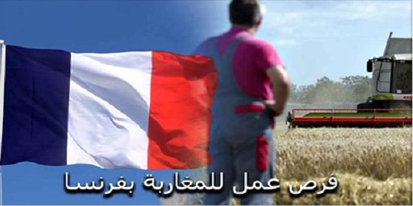 عاجل: مطلوب 28 عمال وعاملات فلاحيين موسميين بدون شهادة او دبلوم بدولة فرنسا