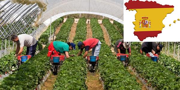عــاجل .. أنابيك : مطلوب عمال وعاملات فلاحيين بدون شهادة او دبلوم بدولة فرنسا